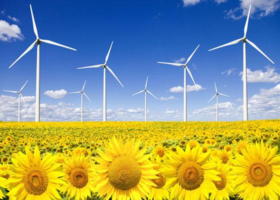 Wind turbines on sunflowers field