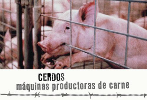 Cerdos maltratados en un matadero de Italia