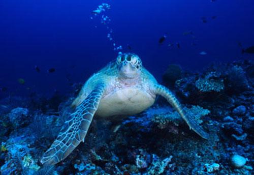 Proteger los océanos genera empleo